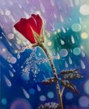 Red rose and rain