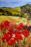 Poppies field.