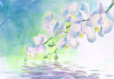 White orchids over water