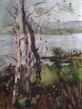 Birches on the Bank