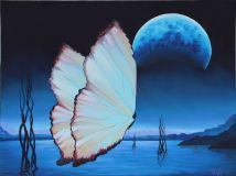 Moonlight butterfly
