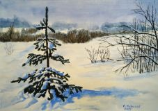 Winter landscape with spruce
