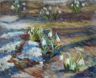 Snowdrops love the sun