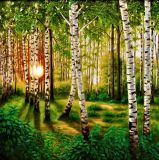 Sunset in a birch grove