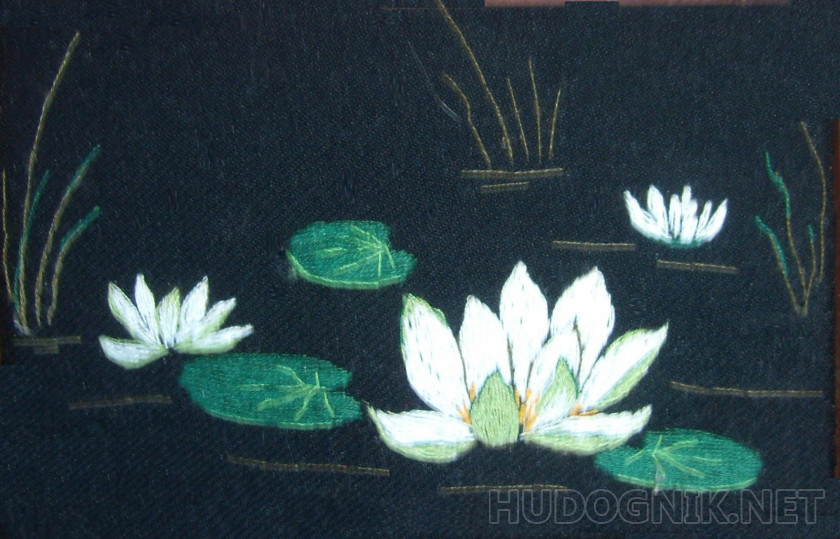 Miniature Water Lilies
