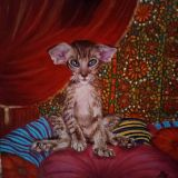 Eeyore, kitten breed Devon Rex