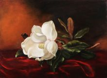 Copy of Martin Johnson heade a Magnolia on red velvet